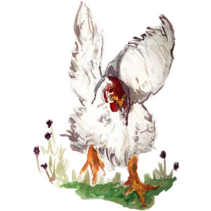 Watercolour Chicken - Peregrine Farm - Chicken Products