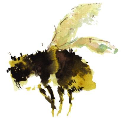 Watercolour Bee - Peregrine Farm - Honey Products